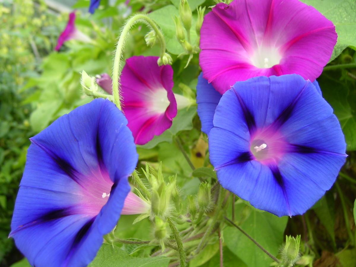 в  цветах:   Бежевый, Бирюзовый, Темно-зеленый, Фиолетовый.  в  .