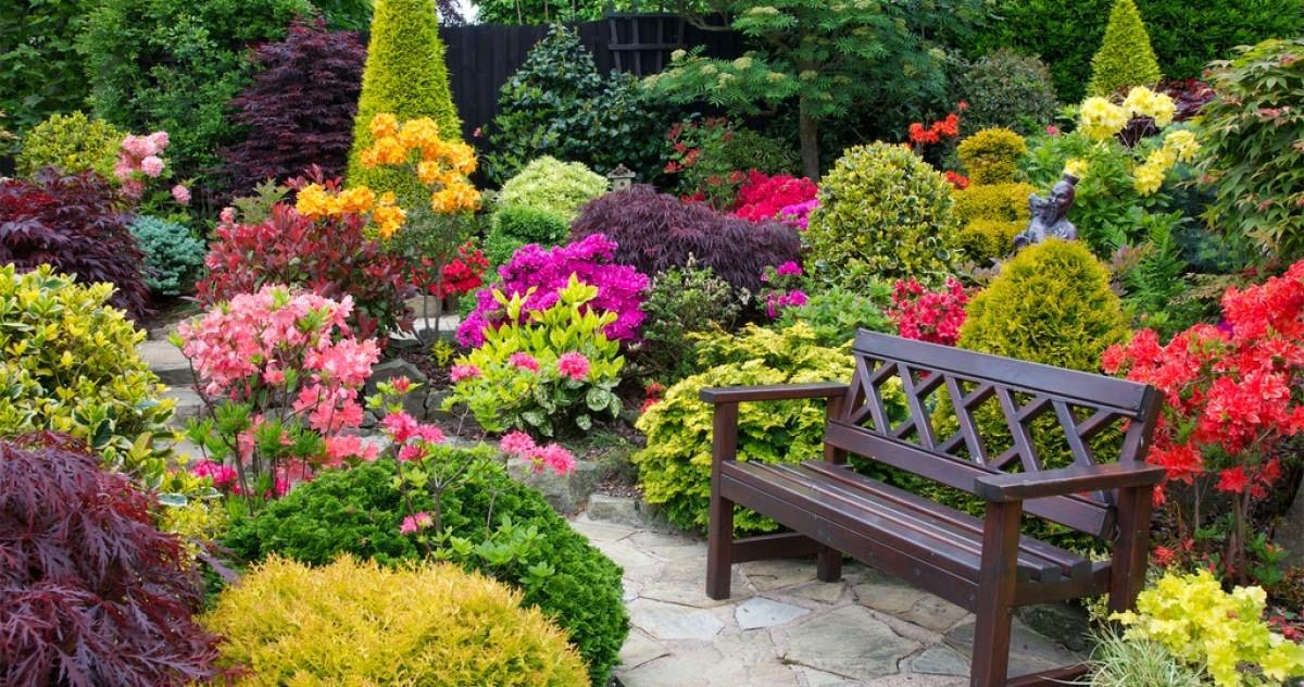 Как подготовить розы и другие цветы на участке к зиме