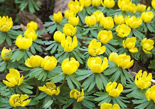Ландшафт в цветах: желтый, лимонный, темно-зеленый, салатовый, коричневый. Ландшафт в .