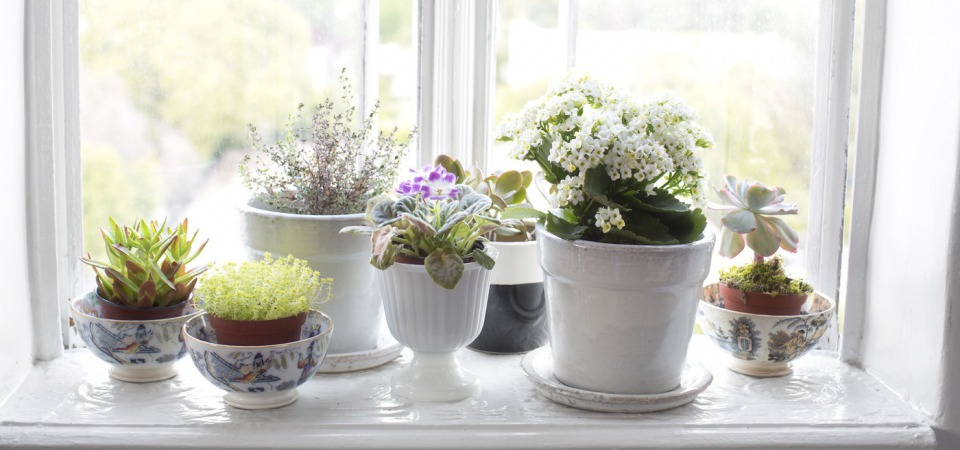 В отпуск с чистой совестью: 5 способов позаботиться о растениях