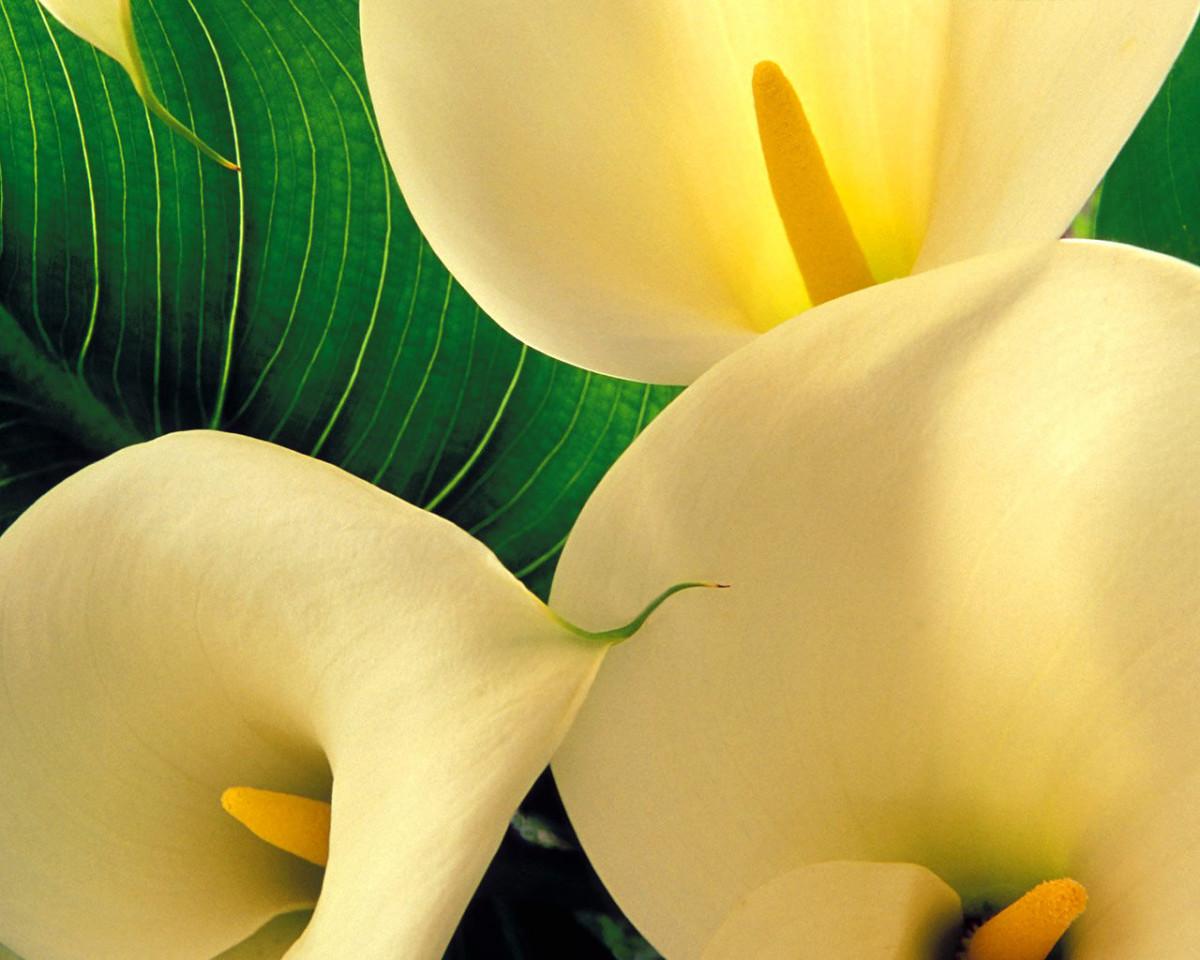 Ландшафт в цветах: желтый, светло-серый, белый, темно-зеленый, салатовый. Ландшафт в стиле кантри.