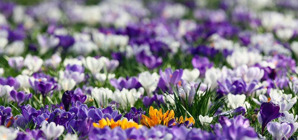 Как самостоятельно создать европейский «цветущий газон»