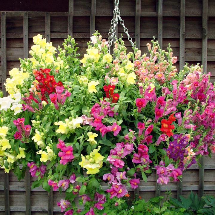Ландшафт в цветах: красный, светло-серый, розовый, лимонный, темно-зеленый. Ландшафт в .