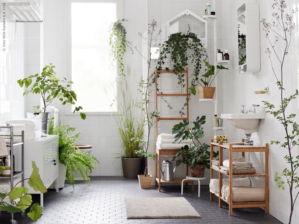 10 мест в квартире, куда лучше не ставить растения