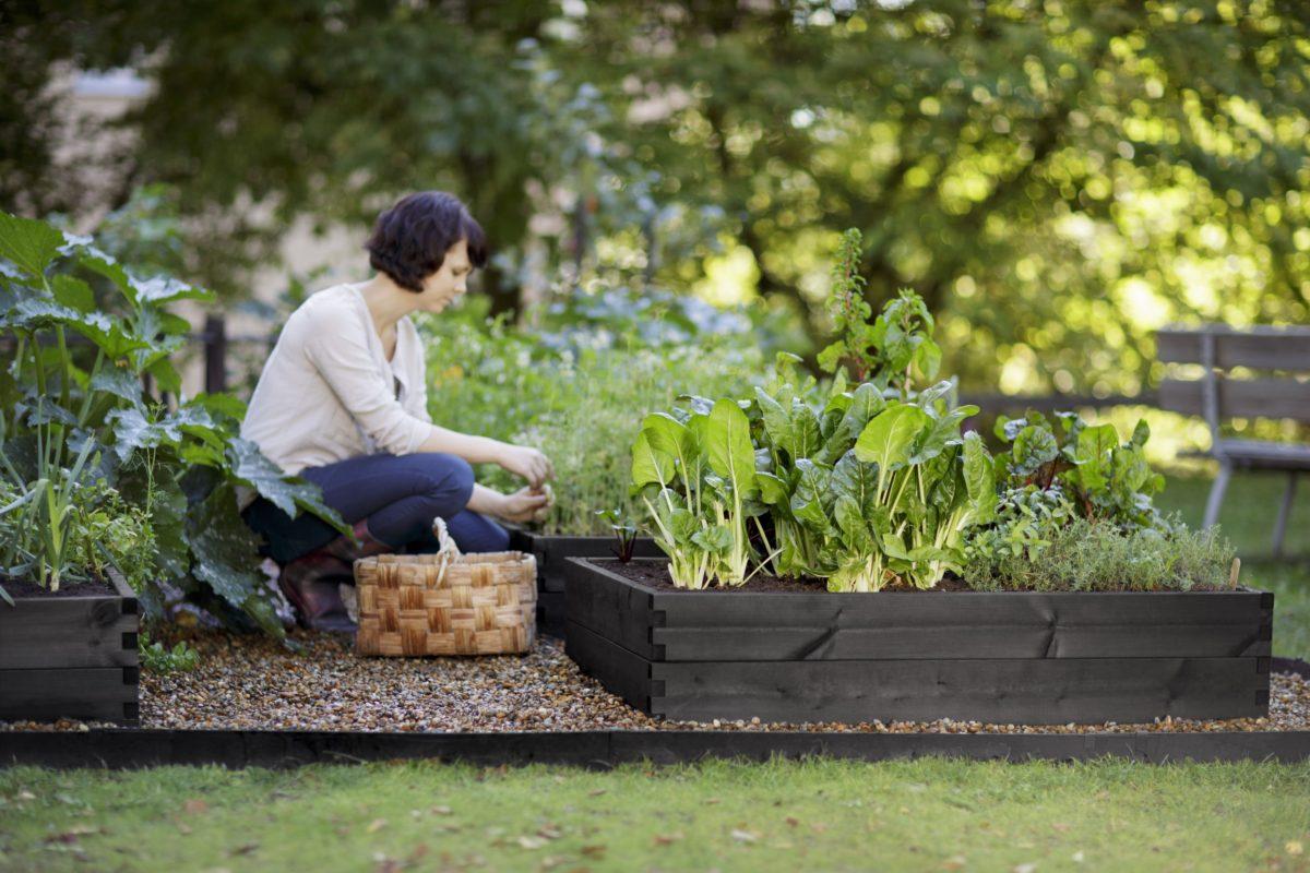 Что посадить на 6 сотках: клумбы из овощей, японский сад и лучшие однолетники