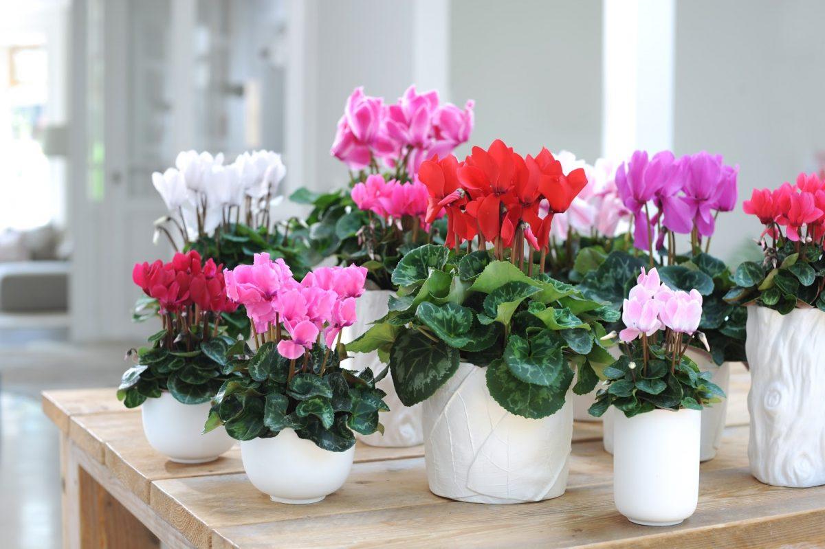 7 домашних растений, которые цветут зимой