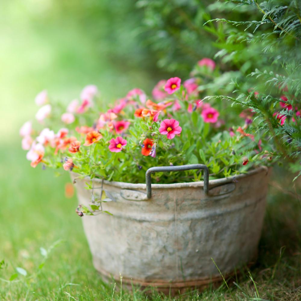 Огород в мае: список неотложных дел на весну